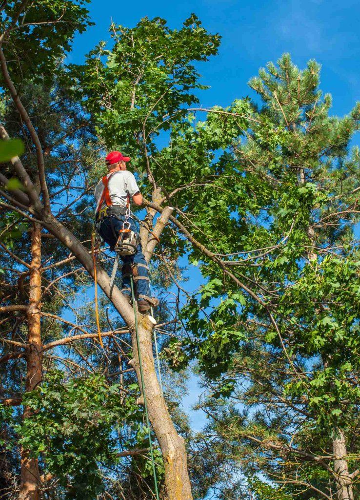 Trädfällning Östersund